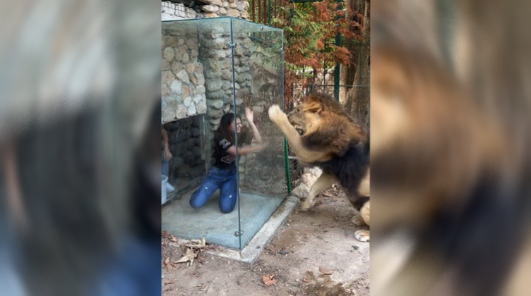 A zoo in Lebanon tortures a lion in a provocative manner - Politics - International Variety