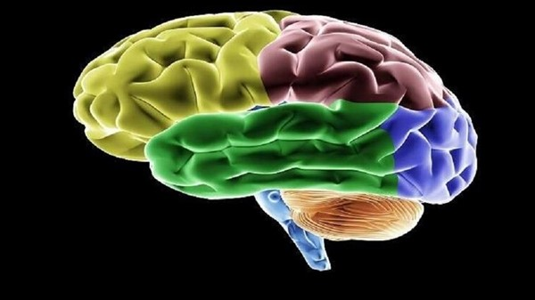 Is the brain able to predict the future?  Science responds